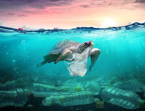 Les déchets plastiques & Karapace